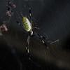 Spiders_Corcovado_CostaRica-1251